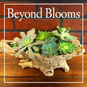 Beyond Blooms