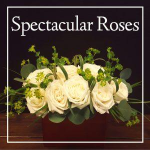 Spectacular Roses